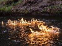 הנהר הבוער אוטסטרליה / צילום: רוייטרס
