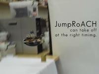 רובוט מקק מקפץ Jumping-Crawling Robot ICRA 2016 / צילום: אוניברסיטת ברקלי