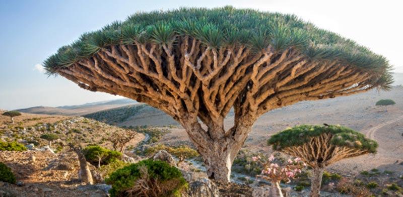 האי סוקוטרה  ,Socotraתימן תיירות / צילום: וידאו