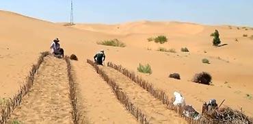 חול מדברי בסין/ צילום: מתוך הוידאו