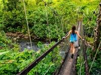 צ'ק אין חופשה בג'ונגל/ צילום: שאטרסטוק