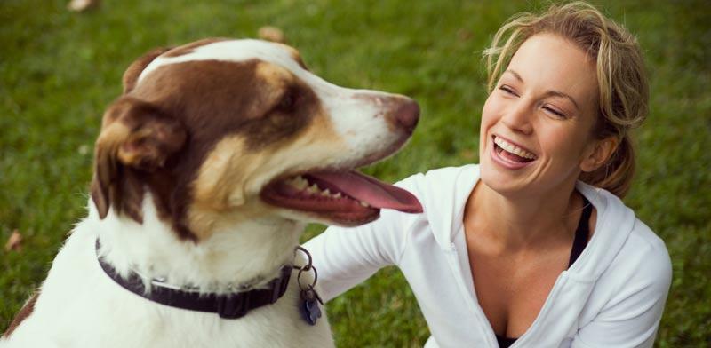 כלבים מדברים / צילום: שאטרסטוק