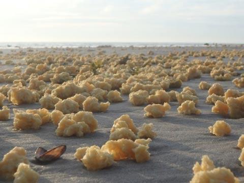 ספוגים צהובים בחופי צרפת/ צילום: מהוידאו