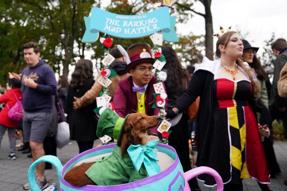 כלב מחופש במצעד מיוחד בניו יורק / צילום: רויטרס