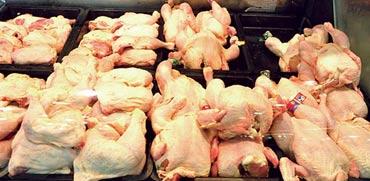עופות בסופרמרקט / צילום: תמר מצפי