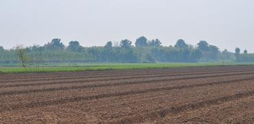 קרקע חקלאית/ צילום:  Shutterstock/ א.ס.א.פ קרייטיב