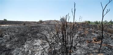 שריפות יער באזור מאגר ניר עם / צילום: אייל פישר