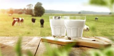 חלב/צילום:shutterstock