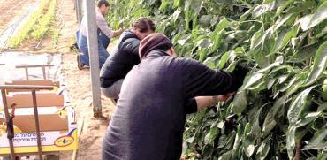 חוות בית השיטין/ צילום: בין השיטין ערבה תיכונה