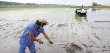 עובד בשדה אורז ביפן/ צילום: רויטרס, Issei Kato