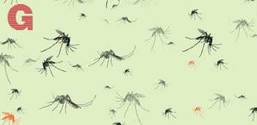 יתושים / איורים: Shutterstock | א.ס.א.פ קריאייטיב