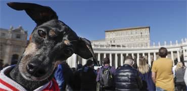 כלב ברחבת הוותיקן / צילום: Andrew Medichini, AP