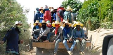 פועלים זרים מתאילנד / צילום: רפי קוץ
