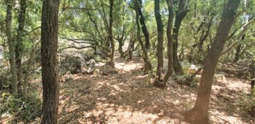 צל וצללים. יער שמעורר את הדמיון / צילום: יותם יעקבסון