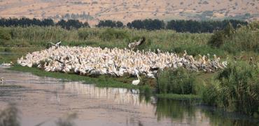 שקנאים בצפון הארץ / צילום: יניב כהן - רשות הטבע והגנים