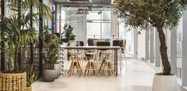 משרדי AKAMAI / תכנון ועיצוב: סטודיו רואי דוד / צילום: איתי בנית