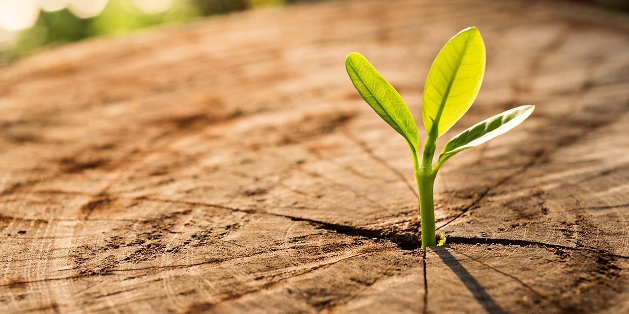הדור הבא של הקורונה / צילום: Shutterstock/א.ס.א.פ קרייטיב