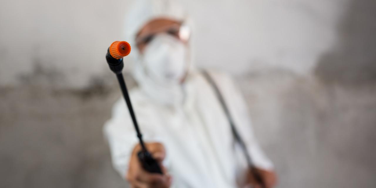 """איך הופכים מ""""סתם מדביר"""" למומחה לחרקים / צילום: Shutterstock/א.ס.א.פ קרייטיב"""