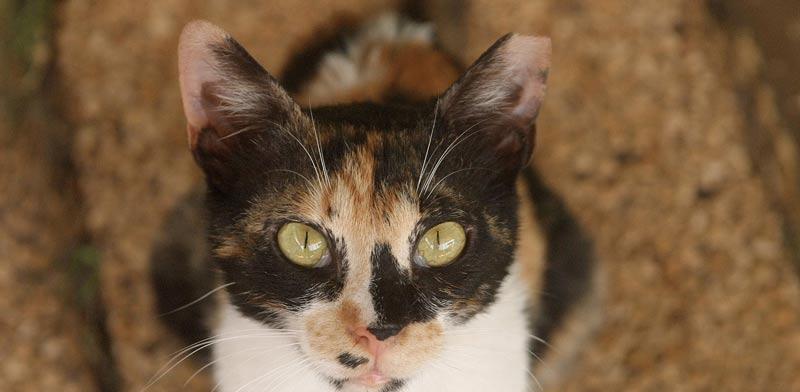 חתול / צילום:אייל פישר