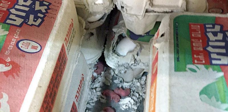 העכברים בין קרטוני הביצים / צילום: ג' - לקוח הסניף