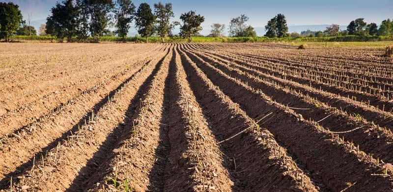 """משנים יעוד: הדרך להפיכת קרקע חקלאית לפרויקט נדל""""ן"""