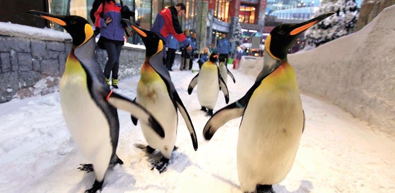פינגווינים בקניון בדובאי / צילום: רויטרס
