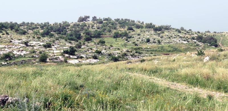גבעות מודיעין / צילום: דב גרינבלט