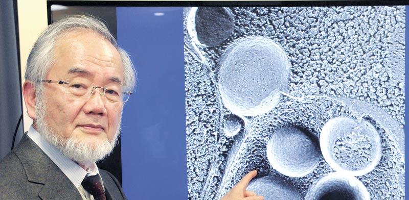 פרופסור יושינורי אוסומי / צילום: רויטרס