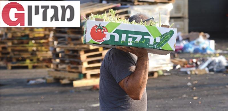 סוחר ירקות / צילום: איל יצהר