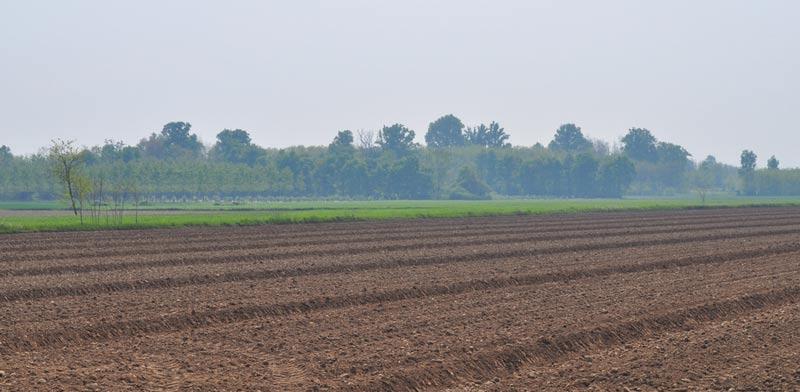 קרקע חקלאית / צילום: Shutterstock, א.ס.א.פ קרייטיב