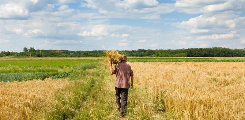 רכישת קרקע חקלאית: מה כדאי לבדוק לפני העסקה