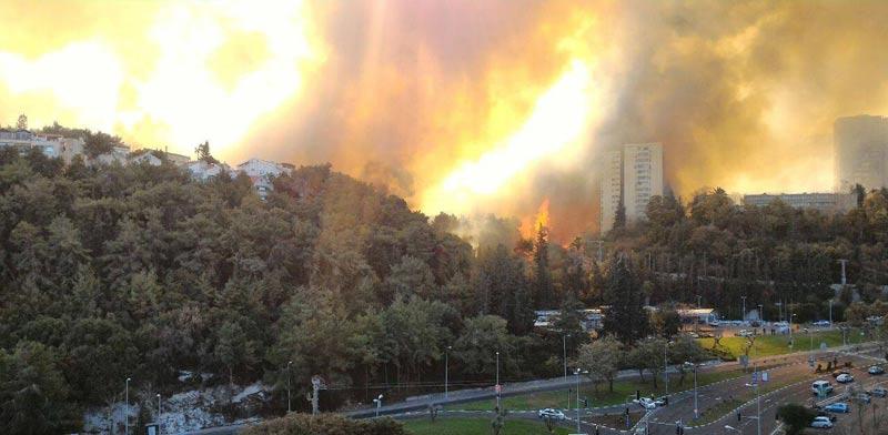 שריפה, חיפה, רוממה / צילום: מירב שרוט