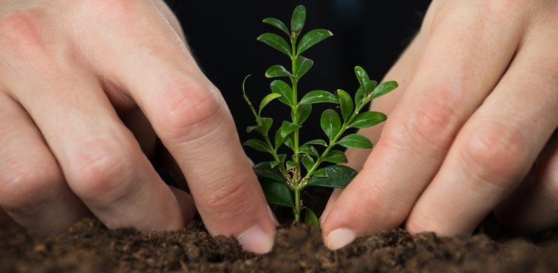 השקעה בקרקעות חקלאיות / צילום: Shutterstock א.ס.א.פ קרייטיב