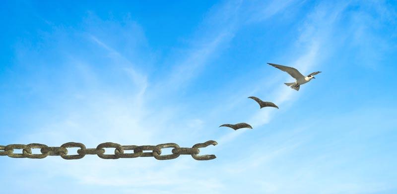 לצאת לחירות כלכלית: מדריך מקוצר להליכי פשיטת רגל