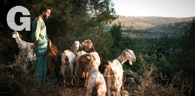 עין כרם, רומנטיקה של רועי עזים / צילומים: מיכל פתאל