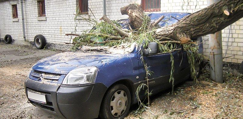 עץ שקרס על רכב /  צילום:  Shutterstock/ א.ס.א.פ קרייטיב