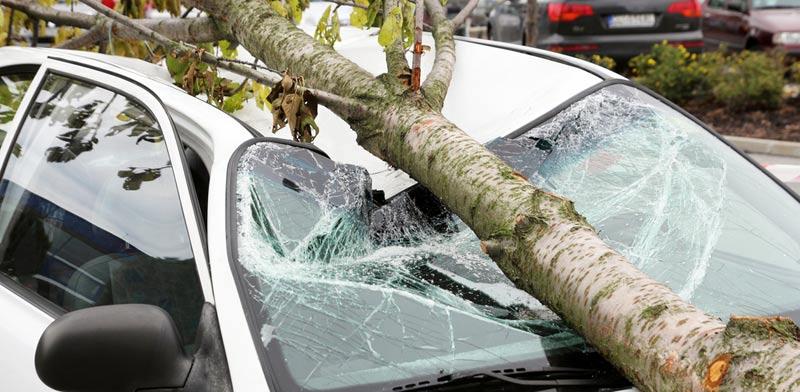 מפגעים מאיתני הטבע/ צילום:  Shutterstock/ א.ס.א.פ קרייטיב