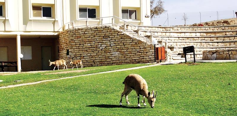 בתי ספר שדה / צילום: באדיבות החברה להגנת הטבע
