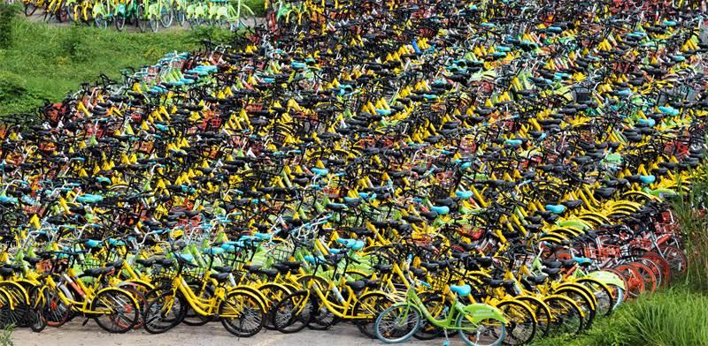 זוגות אופניים של OFO בסין / צילום: שאטרסטוק