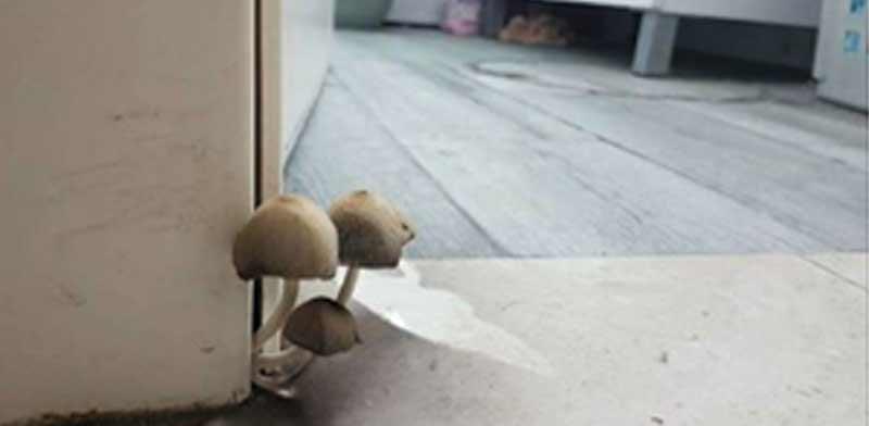 דירה להשכרה פטריות שצצו מהמשקוף/ צילום: פייסבוק