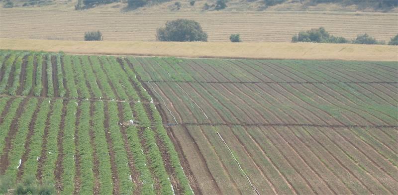 חקלאות בעמק האלה / צילום: איל יצהר