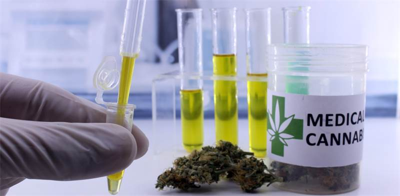 Medical cannabis Photo: Shutterstock