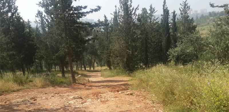 יער ירושלים. השטחים הפתוחים יהפכו נדירים / צילום: איל יצהר