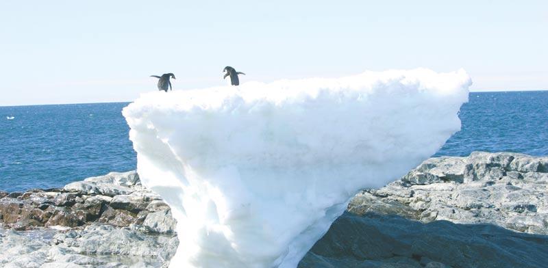200-פינגווינים.jpg