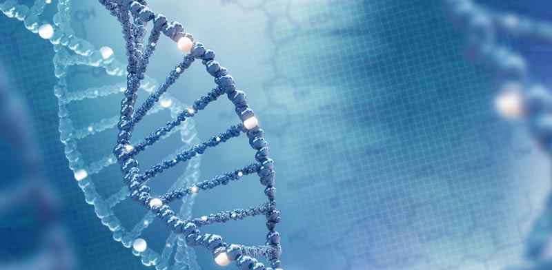 הנדסה גנטית / צילום: Shutterstock, א.ס.א.פ קריאייטיב