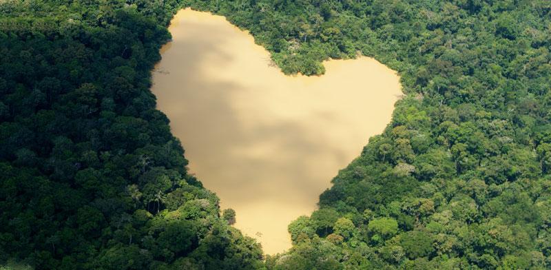 יער הגשם של האמזונס / צילום: רויטרס - Ivan-Canabrava