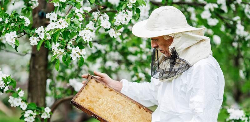 כוורת דבורים תעשייתית / צילום: שאטרסטוק