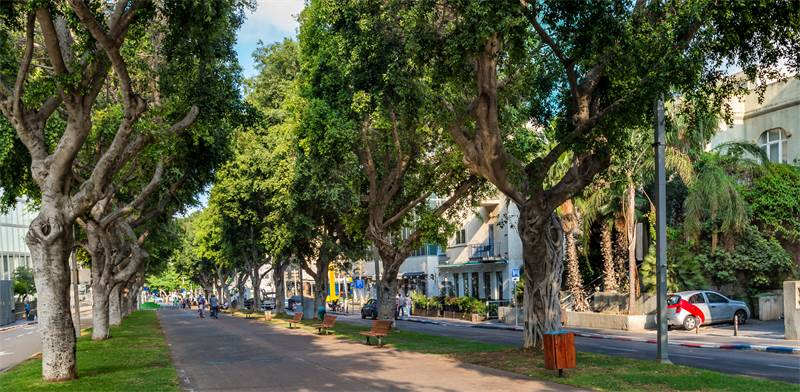 Trees in Tel Aviv Photo: Shutterstock