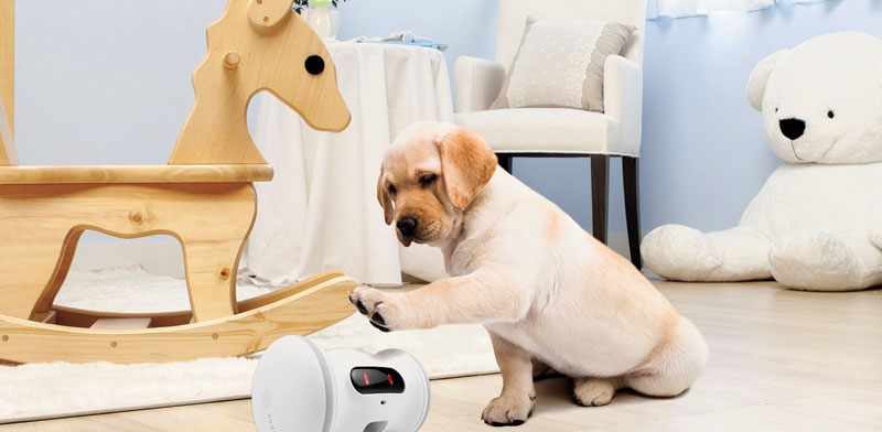 רובוט עם תוכנית כושר לכלבים/ צילום: יחצ