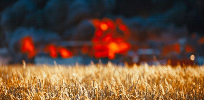 טרור חקלאי / צילום: Shutterstock, א.ס.א.פ קריאייטיב